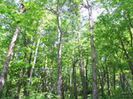 創生の森 木々.JPG