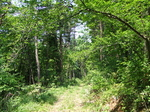創生の森 林道.JPG